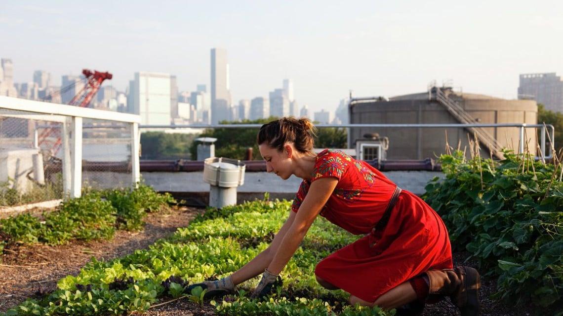 farma na dachu