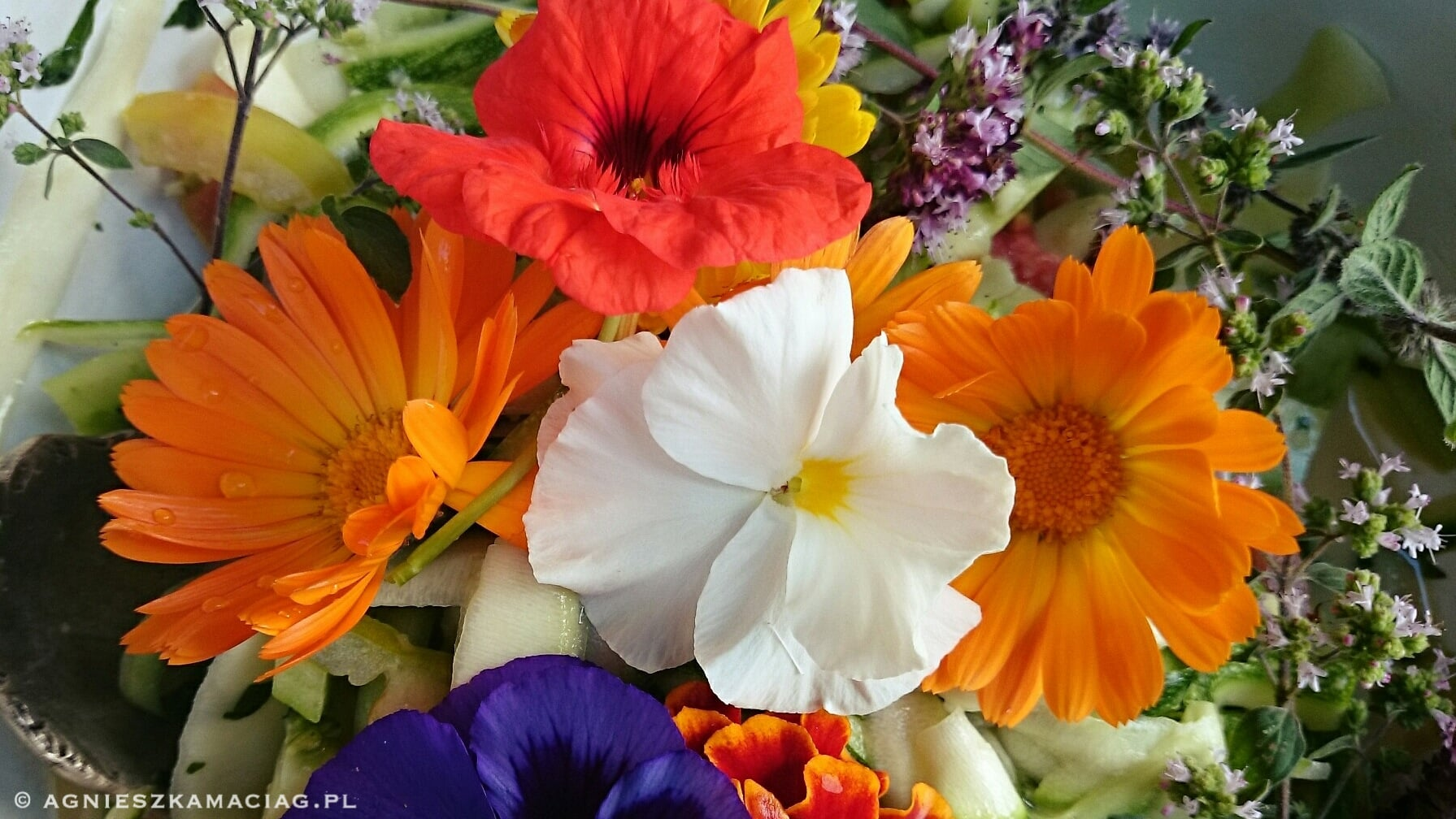 Kwiaty Jadalne Agnieszka Maciag